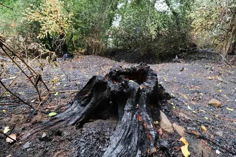 Die Feuerwehr löschte Unterholz An der Alteburg / Pastoratsberg